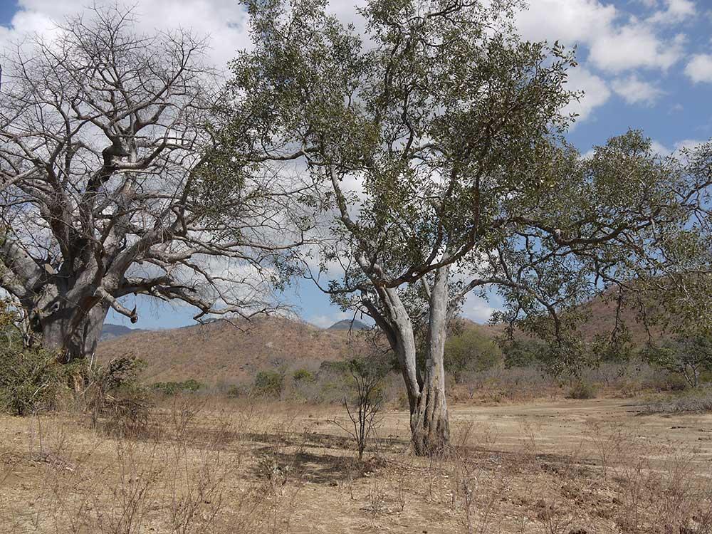 bushbehindlodge