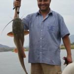 Zambezi fish - Barble