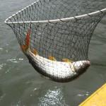 Zambezi fishing -